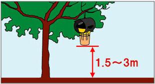 カダンハチ激取れ,害虫駆除,殺虫剤,虫退治,ハチ,蜂,アシナガバチ,スズメバチ