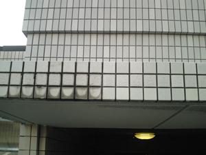 スマート外壁洗浄剤W (医薬用外劇物) 説明画像1