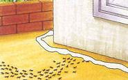 アルゼンチンアリ殺虫&侵入防止粉剤 商品画像3