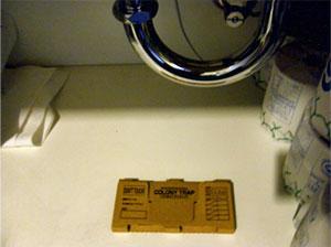 洗面台の下に設置したコロニートラップ