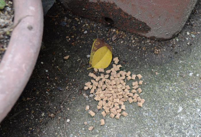 虫コロパーベイト 使用方法1 [害虫駆除、不快害虫、ダンゴムシ、ワラジムシ、ヤスデ、誘引]